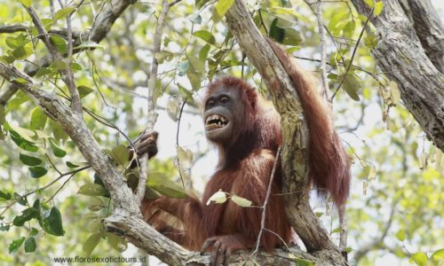 Orangutan adventure tours